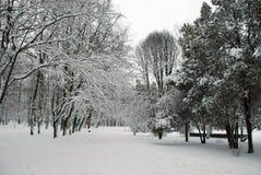 Parque nevado del invierno Foto de archivo