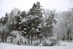 Parque nevado del invierno Imagenes de archivo