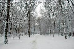 Parque nevado del invierno Fotografía de archivo