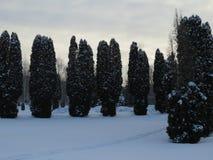 Parque, neve e frio do inverno Avenidas das árvores imagem de stock royalty free