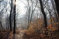 Parque nevoento com caminho e sol foto de stock royalty free