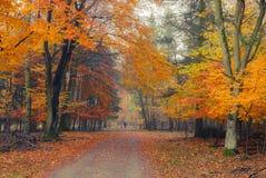 Parque nevoento do outono imagens de stock
