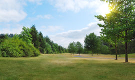 Parque no dia de verão. Imagens de Stock
