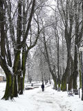 Parque no inverno Foto de Stock