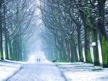 Parque no inverno Imagem de Stock