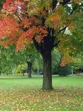 Parque no outono Fotografia de Stock Royalty Free