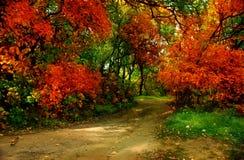 Parque no outono Imagens de Stock Royalty Free