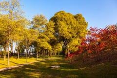 Parque no outono atrasado Imagem de Stock Royalty Free