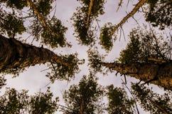 Parque no tempo de mola, dia nebuloso imagem de stock royalty free