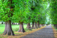 Parque Nottingham Nottingham de Wollaton, Reino Unido, Inglaterra Foto de Stock Royalty Free