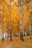 Parque olorful do outono do ¡ de Ð Fotografia de Stock Royalty Free