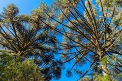 Parque oscuro Gramado el Brasil del lago trees de pino imagen de archivo