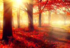 Parque otoñal hermoso en luz del sol