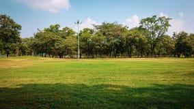 Parque público com grama verde, árvore tropical imagem de stock