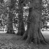 Parque público con los árboles viejos El circo, baño, Somerset, Reino Unido Imagen de archivo