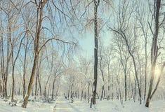 Parque público de Europa con los árboles y las ramas cubiertos con la nieve y el hielo, bancos, polo ligero, paisaje Foto de archivo libre de regalías