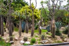 Parque público de Suan Luang RAMA IX Imagens de Stock Royalty Free