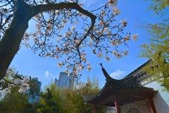 Parque público de Sun Yat-sen en Vancouver Canadá Fotografía de archivo libre de regalías