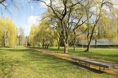 Parque público en la primavera temprana, vuelta del principio de la naturaleza al verde Fotos de archivo libres de regalías