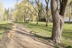 Parque público en la primavera temprana, vuelta del principio de la naturaleza al verde Imágenes de archivo libres de regalías