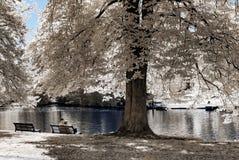 Parque público natural en Estrasburgo, visión infrarroja, día soleado fotografía de archivo libre de regalías