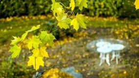 Parque pacífico vacío, tabla blanca clásica foto de archivo libre de regalías