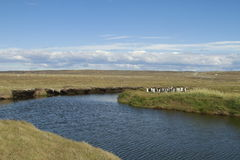 Parque Pinguino Rey - parco di re Penguin su Tierra del fueg Immagini Stock Libere da Diritti