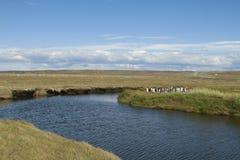Parque Pinguino Rey - parque de rey Penguin en Tierra del fueg Imágenes de archivo libres de regalías