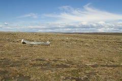Parque Pinguino Rey - parque do rei Penguin em Tierra del fueg Fotografia de Stock Royalty Free