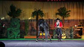 PARQUE POMBIA, ITALIA DEL SAFARI - 7 DE JULIO DE 2018: funcionamiento hermoso del pura sangre, caballos entrenados los caballos r almacen de video