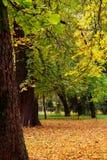 Parque quieto bonito no outono fotos de stock
