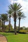 Parque Ramat Hanadiv, jardines conmemorativos de Baron Edmond de Rothschild Fotos de archivo libres de regalías