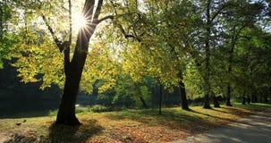Parque real de Lazienki en Varsovia, Polonia almacen de video