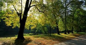 Parque real de Lazienki en Varsovia, Polonia almacen de metraje de vídeo