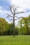 Parque real de Sanssouci en Potsdam, Alemania Fotos de archivo
