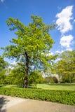 Parque real de Sanssouci en Potsdam, Alemania Imagenes de archivo