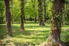 Parque real de Sanssouci en Potsdam, Alemania Imagen de archivo libre de regalías