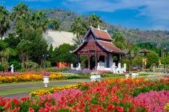 Parque real Ratchaphruek Chiang Mai Thailand del jardín de flores imagen de archivo libre de regalías