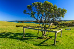 Parque regional de Shakespear, región de Auckland, Nueva Zelanda Fotos de archivo libres de regalías