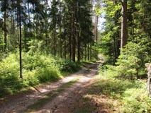 Parque regional dos kÄ-s do ¡ de DieveniÅ (Lituânia) Foto de Stock