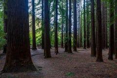 Parque rojo de maderas en Nueva Zelanda imagen de archivo