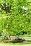 Parque romántico imagen de archivo