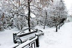 Parque Siberian nevado fotografia de stock