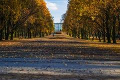 Parque Silesian em Katowice Via pública larga e urbanizada no outono com árvores do ouro fotografia de stock
