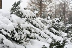Parque sitiado por la nieve Fotografía de archivo