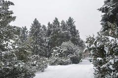 Parque sitiado por la nieve Imagen de archivo