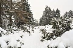 Parque sitiado por la nieve Fotos de archivo