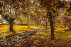 Parque soleado Foto de archivo libre de regalías