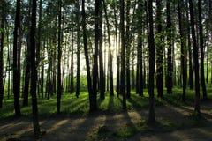 Parque soleado en Rusia foto de archivo
