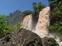 Parque-Staatsangehöriger Iquazu Stockbild